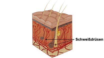 Schweißdrüsenabsaugung  Dr. Kai Rezai hyperhidrose hyperhidrosis hyperhydrose hyperhydrosis schweissdruesen operation  schweissdrüsen operation schweißdruesen operation schweißdrüsen operation schweissdruesen op schweissdrüsen op schweißdruesen op schweißdrüsen op schweissdruesenop schweissdrüsenop schweißdruesenop schweißdrüsenop schweissdruesenoperation schweissdrüsenoperation schweißdruesenoperation schweißdrüsenoperation suctionskürretage schweißdrüsenabsaugung schweissdruesenabsaugung schweißdruesenabsaugung schweissdrüsenabsaugung Botox Isolagen Faltenunterspritzung Haarentfernung Fett-Weg-Spritze Piercing Chemical Peeling Tätowierungsentfernung Münster